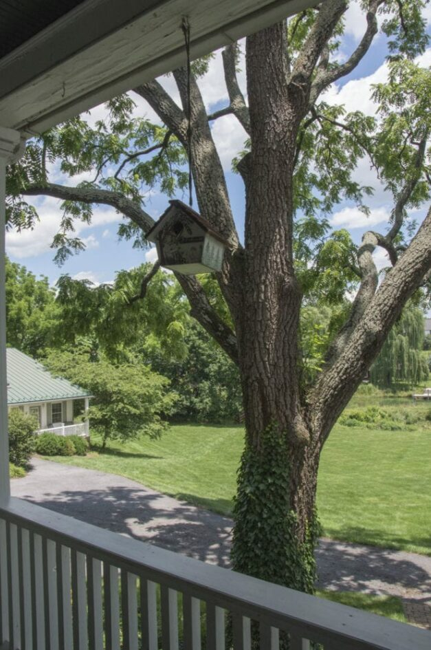 A porch with the view of a large leafy tree with a quaint birdhouse.