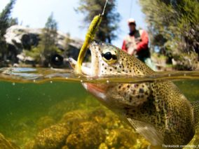 Learn new skills at the Virginia Fly Fishing Festival.